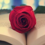 the-flower-on-the-book
